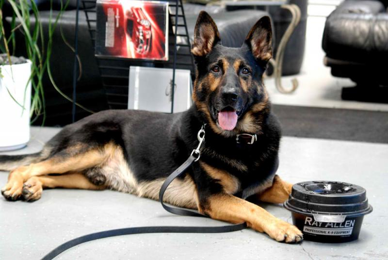 Ray Allen K9 works with large brands such as Kong, Under Armour and Oakley. Ray Allen himself worked with, and studied, K9 dogs in the police and military for years, and the products are tested extensively to ensure the quality. Ray Allen have been providing Working Dog Training Bite Suits for more than 60 years.